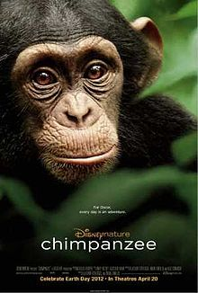 Chimpanzee film