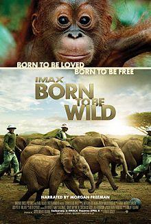 Born to Be Wild 2011 film