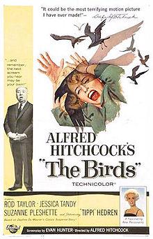 The Birds film