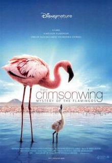The Crimson Wing Mystery of the Flamingos